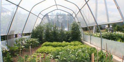 Profesionalni in vrtni rastlinjak