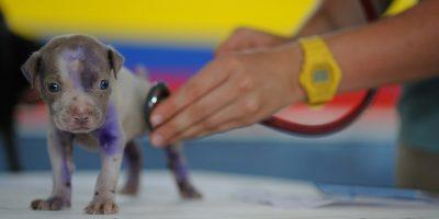 veterinarska ambulanta za male živali